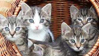 La nutrition du chaton