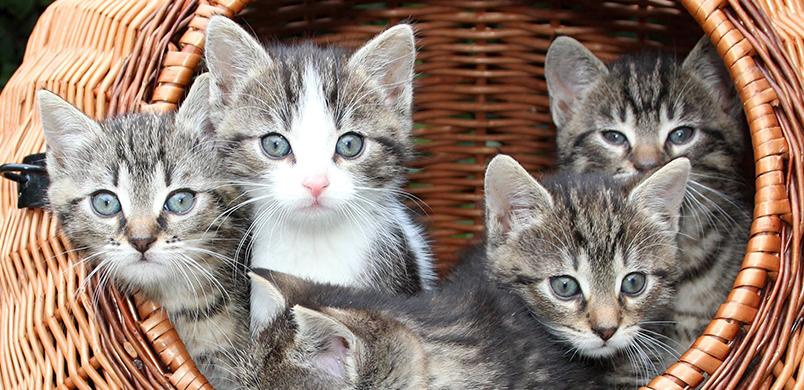 Jeunes chatons
