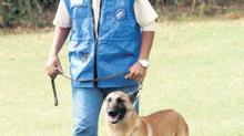Emmener son chien en promenade