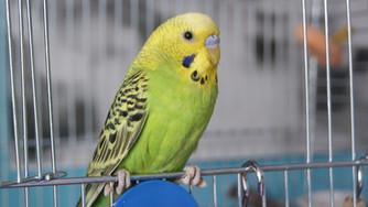 Une bonne hygiène des cages à oiseaux