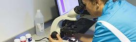 Dr. Pignolet analysant un échantillon au microscope