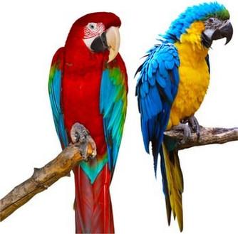 Dix conseils pour rendre votre perroquet heureux