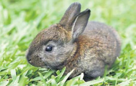 Un jeune lapin
