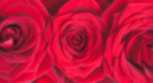 Moonflower_Cobham_Florist.jpg