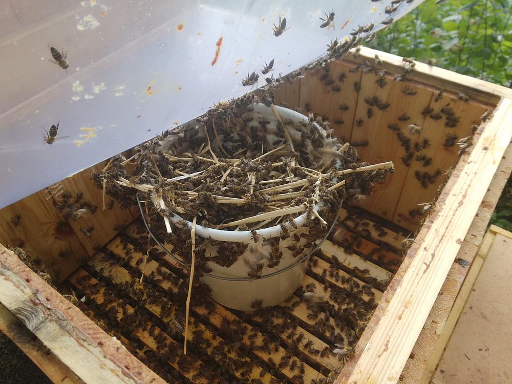 Včely se krmí z kýble