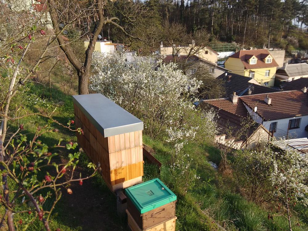 Včely v Brně