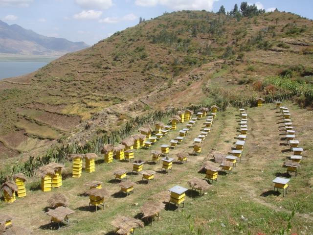 Moderní včelaření v Etiopii