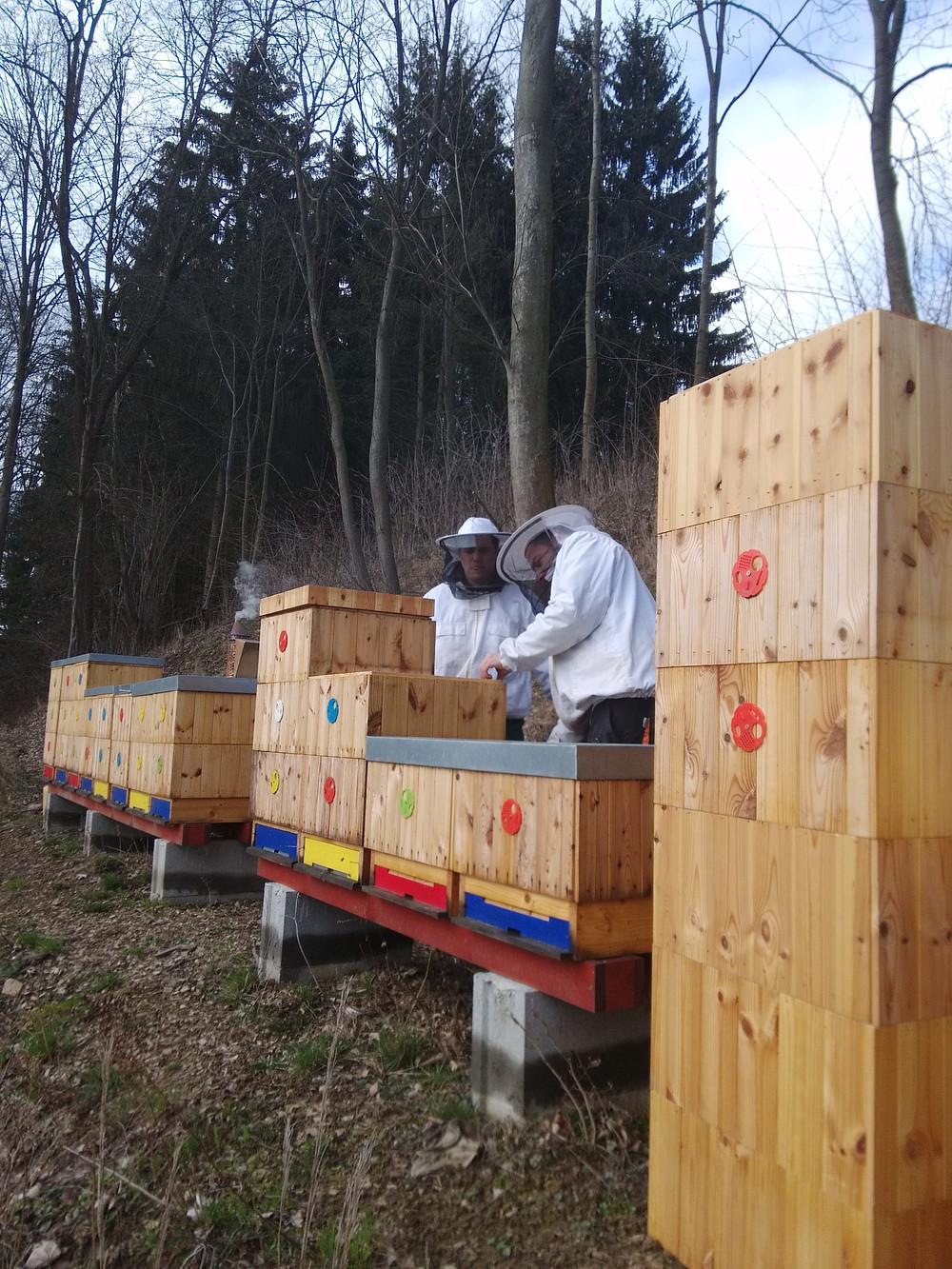Letos máme v Jihlavě 12 včelstev