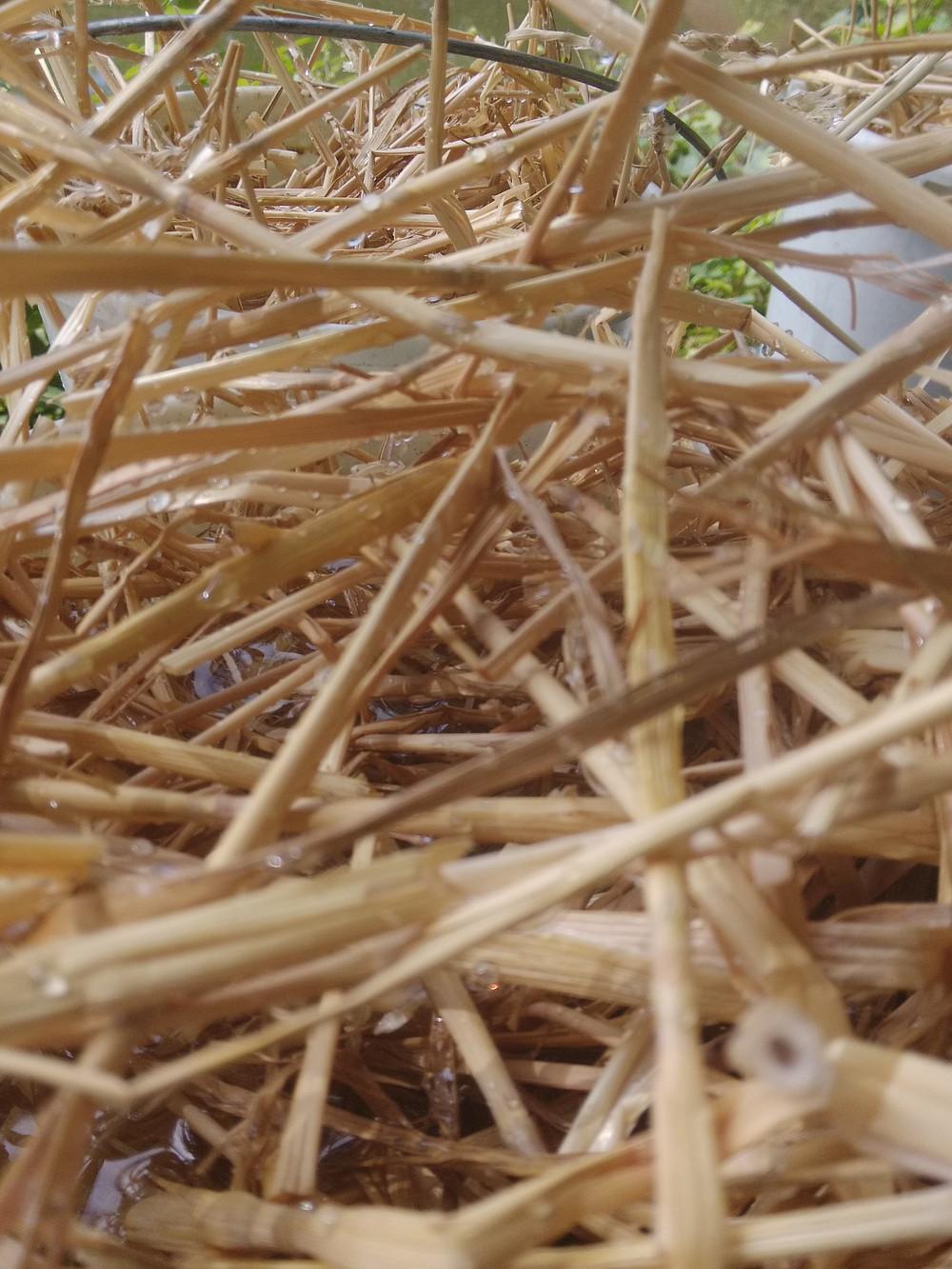 Kýbl sláma a roztok