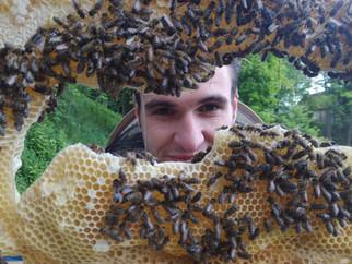 Cena medu 2016 - Aneb váží si včelaři vlastní práce?