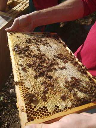 Složení medu a co jsme letos vytočili