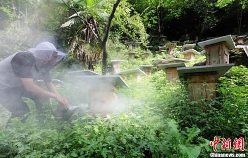 Včelaření v Číně