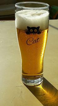 verre biere cat.jpg