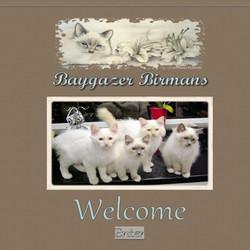 Baygazer Birmans