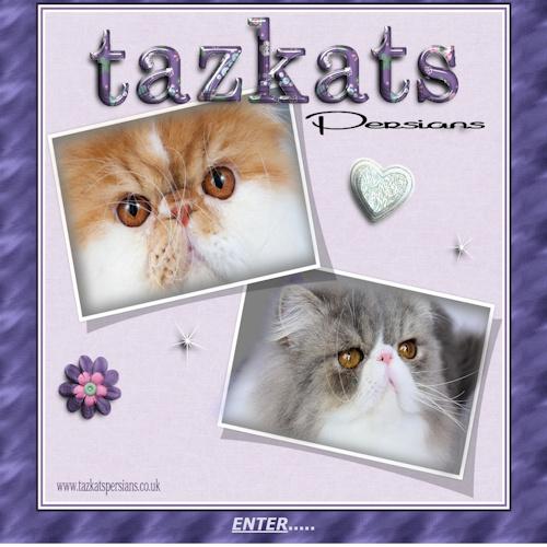Tazkats Persians