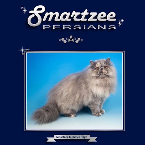 Smartzee Persians