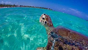 akumal-turtle-snorkeling.jpg