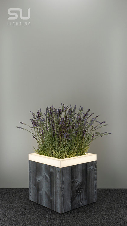THERMO Gray Spruce