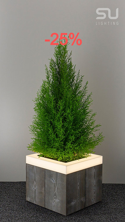 THERMO Gray Spruce low
