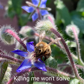 Why killing bees is pointless and will lead to other pest problems