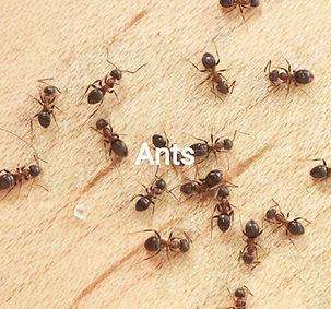 ants_edited_edited.jpg