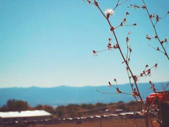 Fall Fields