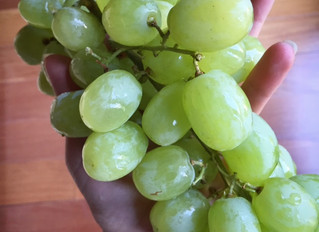 Uvas mágicas / Magic grapes; eat them tonight and all year round