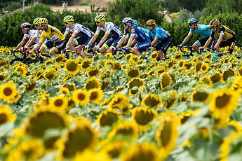 Le Tour cycling in sunflowers.jpg