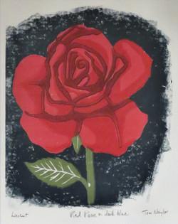 Red Rose on Dark Blue