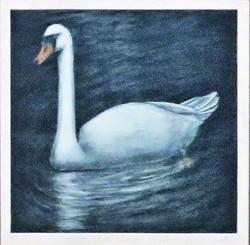 Mute Swan - On Alert