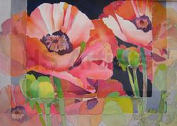 5 Poppies