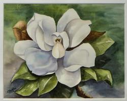 Highland Springs Magnolia