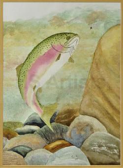 Rainbow Trout in Rocky Stream