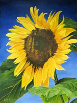 Orcus Island Sunflowers