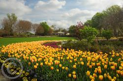 Springtime @ Dallas Arboretum