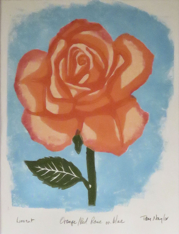 Orange/Red Rose on Blue