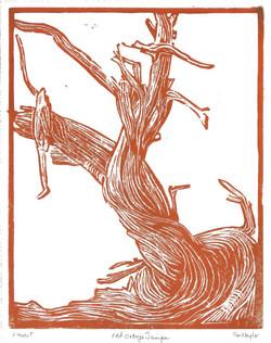 Red-Orange Juniper Linocut