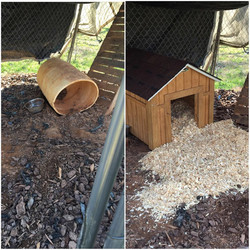 houses for hounds before and after