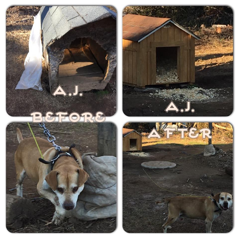 AJ before and after-houses for hounds