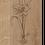 Thumbnail: AMARYLLIS FALTKARTE