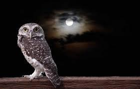 Beautiful owl with a shiny moon