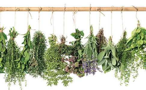 Herbal Alternatives