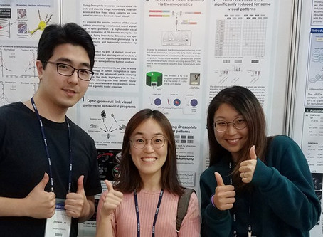 A poster presented for ICKSMCB 2018!