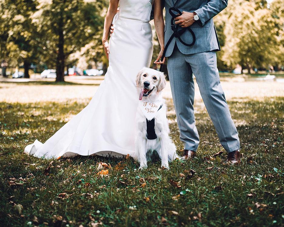 Angie Loves Dogs Amsterdam, de individuele hondenuitlaatservice en hondenoppas in Amsterdam en omgeving. Daarnaast honden taxi services, hondenfotografie, art prints van uw hond of familie en honden services tijdens de bruiloft, huwelijk, trouwerij.