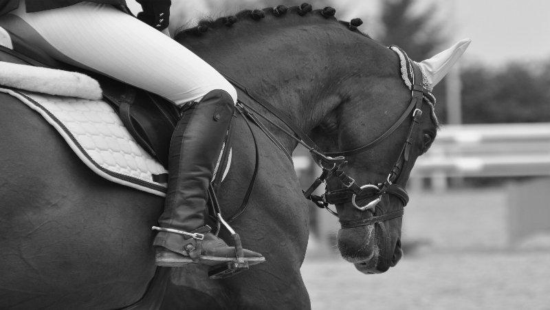 Mibitec ANOVET CHEVAL, Anovet Cheval Liquid, Strahlfäule Behandlung, Strahlfäule behandeln, Strahlfäule was tun, Mauke Behandlung, Mauke was tun, Mauke behandeln, Mauke Pferd was hilft, Sommerekzem Pferd Behandlung, Sommerekzem Behandlung