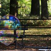 New York bubbles