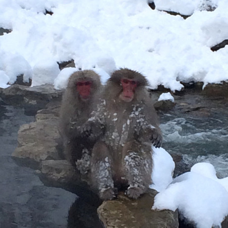 Meet the bathing wild monkeys in Nagano