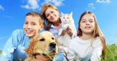 pet insurance, dog insurance, healthy pets, cat insurance, insurance for dogs, vet insurance, insurance pets