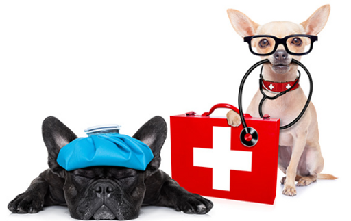 Pet Doctors.PNG