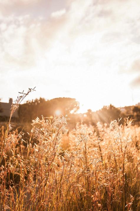 Sunset - Esplugues de Llobregat